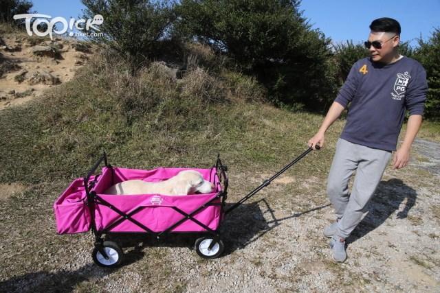 為方便帶歌妮外出,二人特地購入手推車,改名為「勞鼠來鼠」。