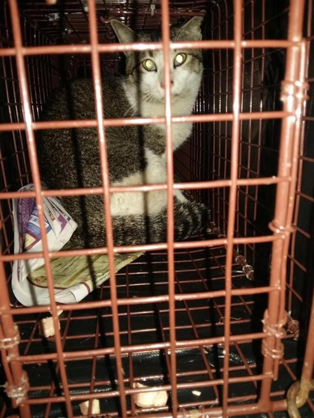 貓兒的肛門位置清楚看到有魚鈎外露。 linda cat and dog house提供