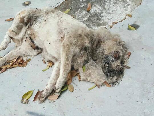 小狗死在阿毛平時休息的地方,但連餵狗的義工都沒見過他,無人認識。