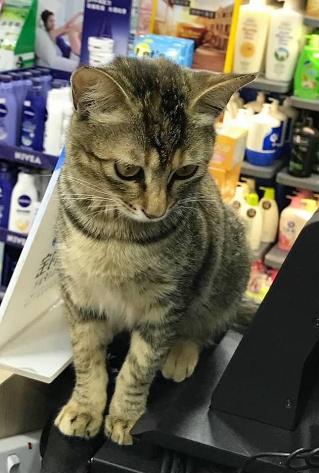 被捉走的店貓