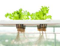 IKEA Launches Indoor Garden That Can Grow Food All Year ...