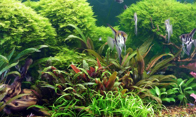 Aquarium 3d Live Wallpaper Pro Tipos De Acuario Hogarmania