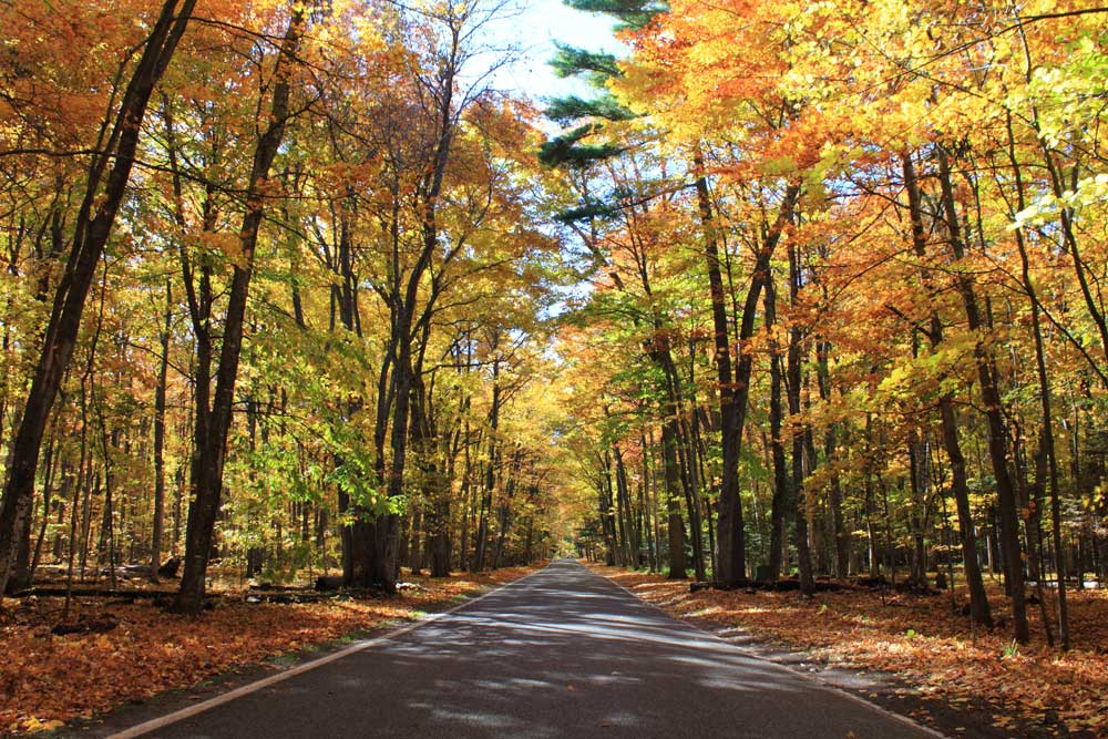 Wallpaper Images Of Fall Trees Lined Lake The Tunnel Of Trees On M119 In Northern Michigan