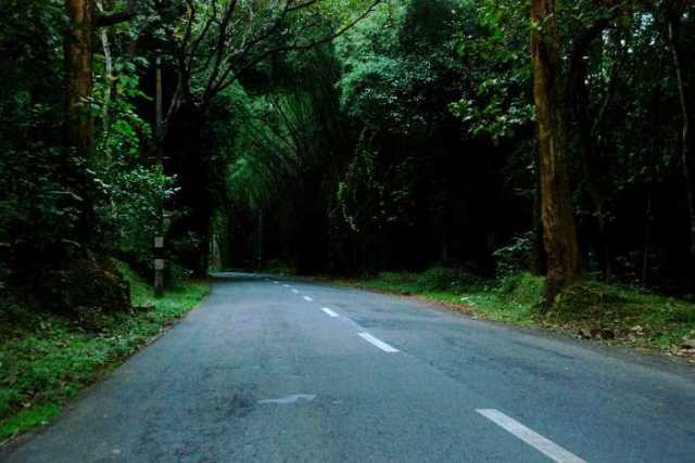 beautiful road trips forest India