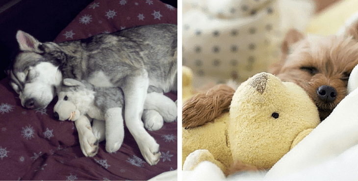 17 Dogs Who Can T Sleep Without Their Favourite Cuddly Toys