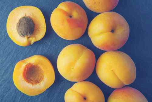 Medium Of Can Dogs Eat Apricots