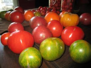 Barbara Kingsolver swears by 15 Tomato Plants for a Family of Four