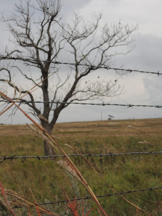 leafless tree, barbed wire, prairie grass, pumpjack