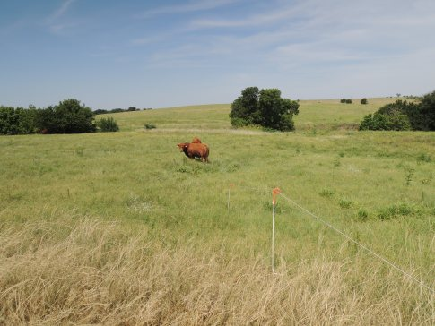 Learning Rotational Grazing