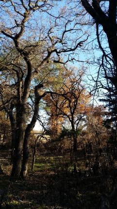 Nov 2016 trees