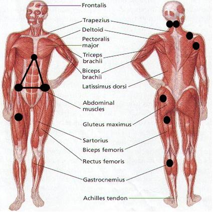 Full Body Trigger Points Diagrams - Block And Schematic Diagrams \u2022
