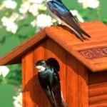 bird-house-garden