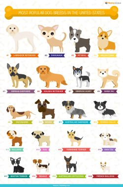 Small Of German Names For Dogs