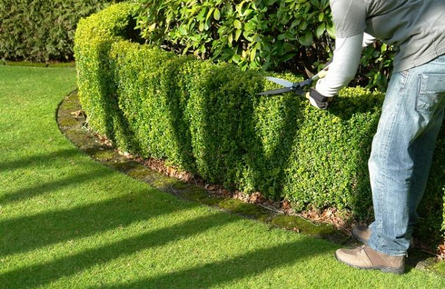 Garden  Yard Maintenance Services Costs - Mowing, Raking, Hedge