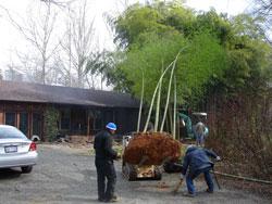 Japanese Timber Bamboo Image