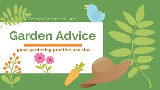 Garden Advice: Keep A Close Watch
