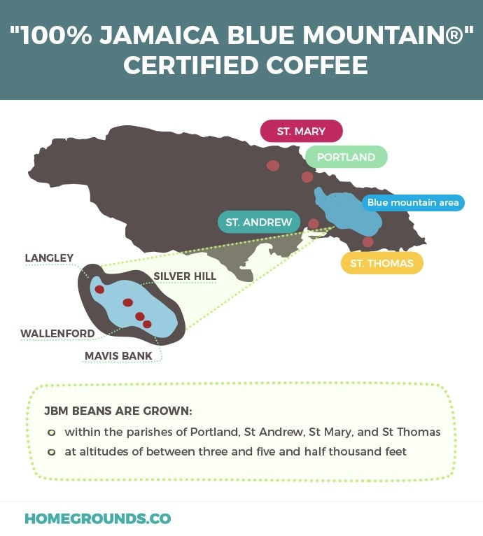 Jamaican Blue Mountain Coffee Where To Buy + SCAMS To Avoid