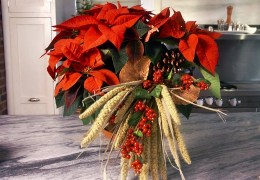 How to Add a Natural Accent to a Poinsettia Plant