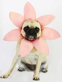 15 Easy & Simple DIY Pet Costumes