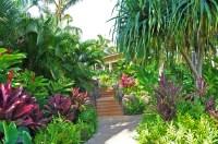 Hawaiian Tropics Landscape - Bing images
