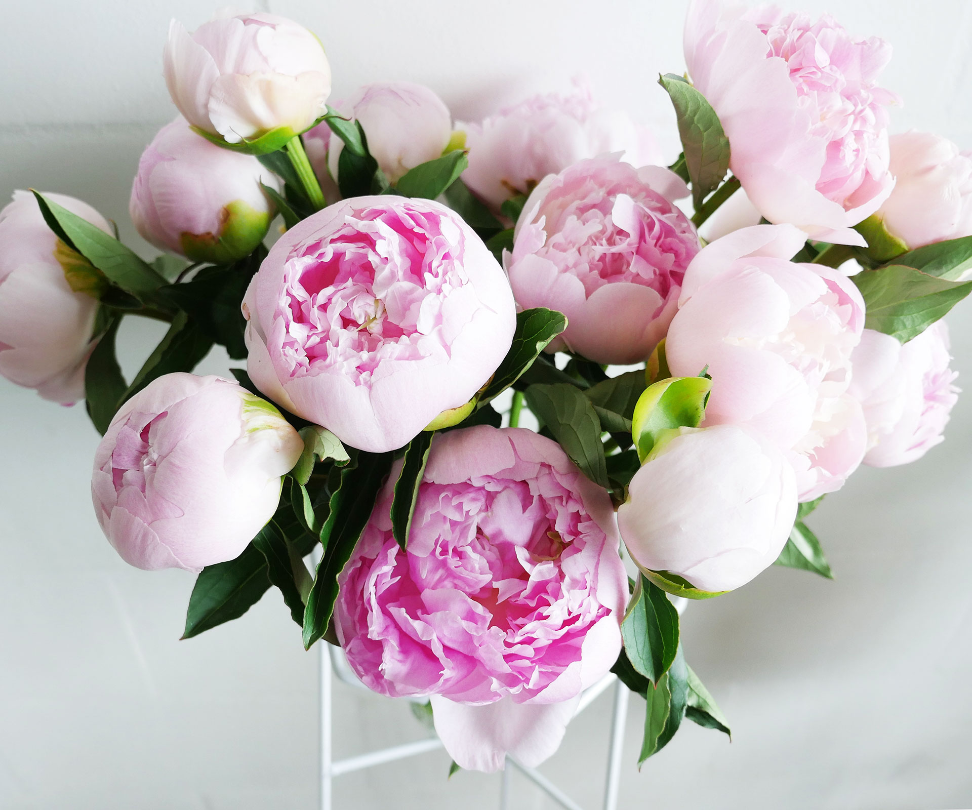 Black Floral Wallpaper Floral Fridays 5 Tips For Perfect Peonies