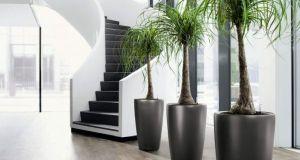 indoor-plant-display-ideas-1