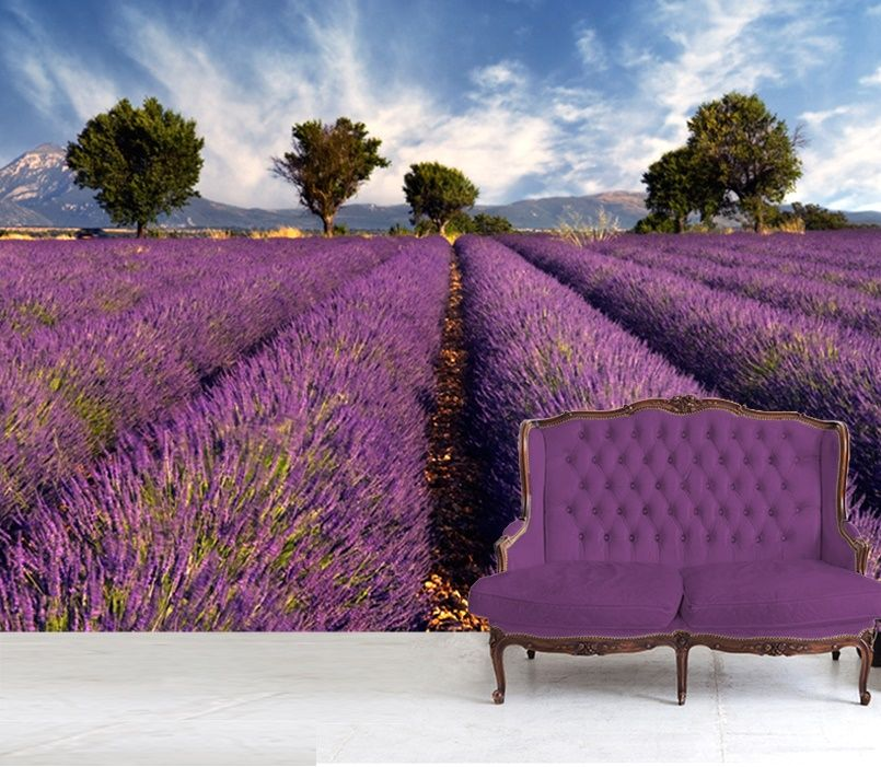 Disney Cars Wallpaper Mural Lavender Field In France Wallpaper Murals By Homewallmurals