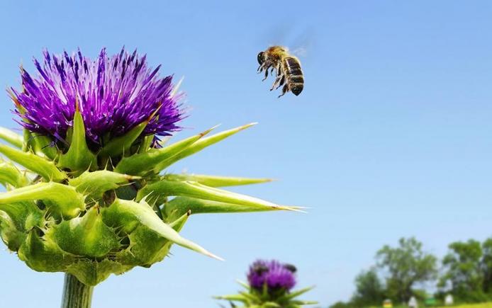EU bans neonics; US bees not so lucky Honey Bee Haven