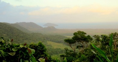 Road Trip to the World's Oldest Rainforest