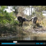 Elephant encounter while fishing the river banks of the Zambezi River, Zambia