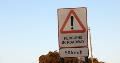 You Know You're in South Africa When . . .