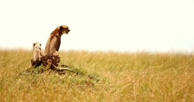 The Great Maasai Mara