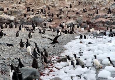 PHOTOS: Antarctica Honeymoon