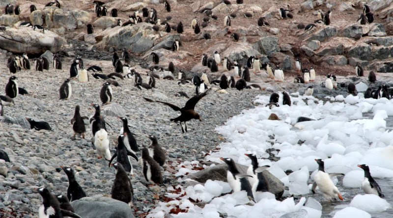 How many penguins do you see in Antarctica