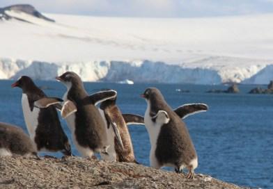 VIDEO: Antarctic Penguin Shenanigans