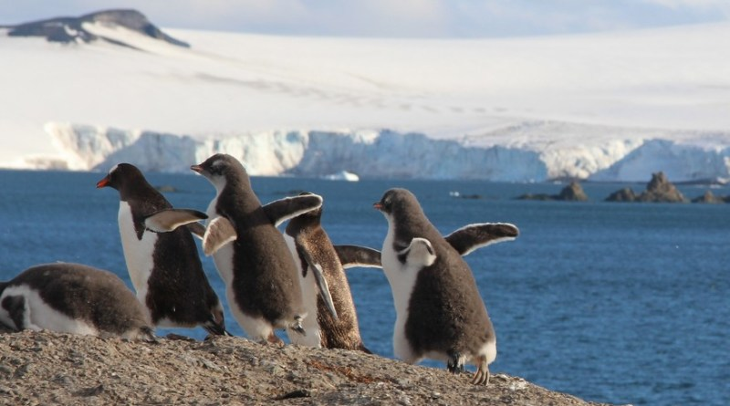 Aitcho Island Penguins-HoneyTrek.com