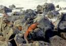 Island Hopping the Galapagos: Part 1
