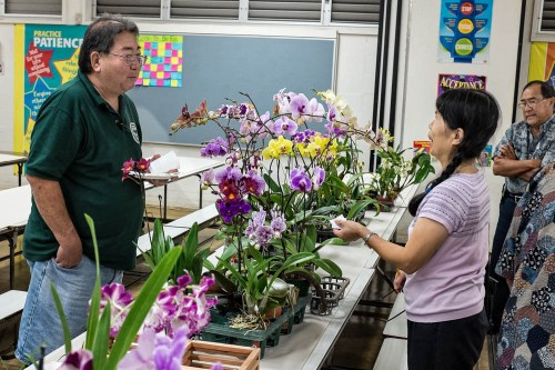 Calvin Kumano and Margaret Lin discuss the qualities of the Phalaenopsis plants in the auction.
