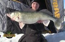 Ice Fishing Gigantic Greenback Walleye in Manitoba