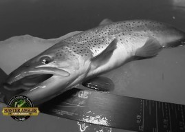 Ice Fishing for Hawg Brown Trout in Manitoba