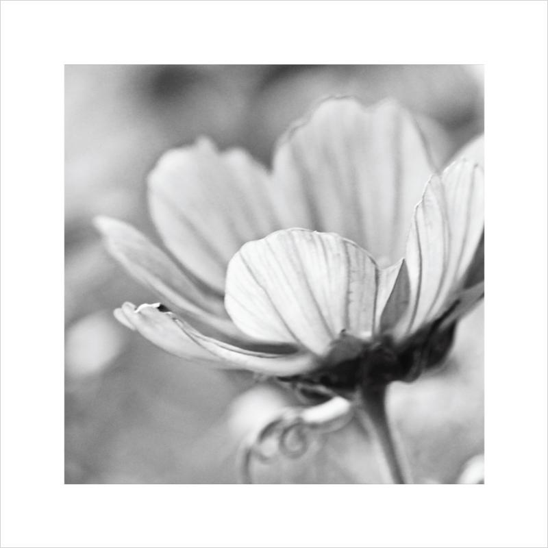 Flora-photographic-art-print