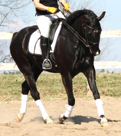 Horseback Riding the Yoga Way-Practice
