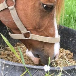 The lure of pre-mixed feeds and pellets, which are quick and easy to feed is great, but are they good for your horse?