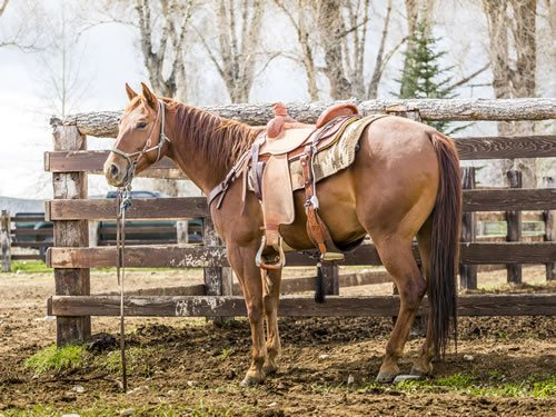 31 Things To Do With Your Horse Other Than Riding