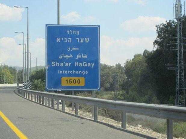 גאוה ירושלמית (צילום נ. אבנהיים)