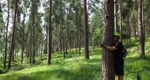 יער אורנים - צילום: רוני נאק