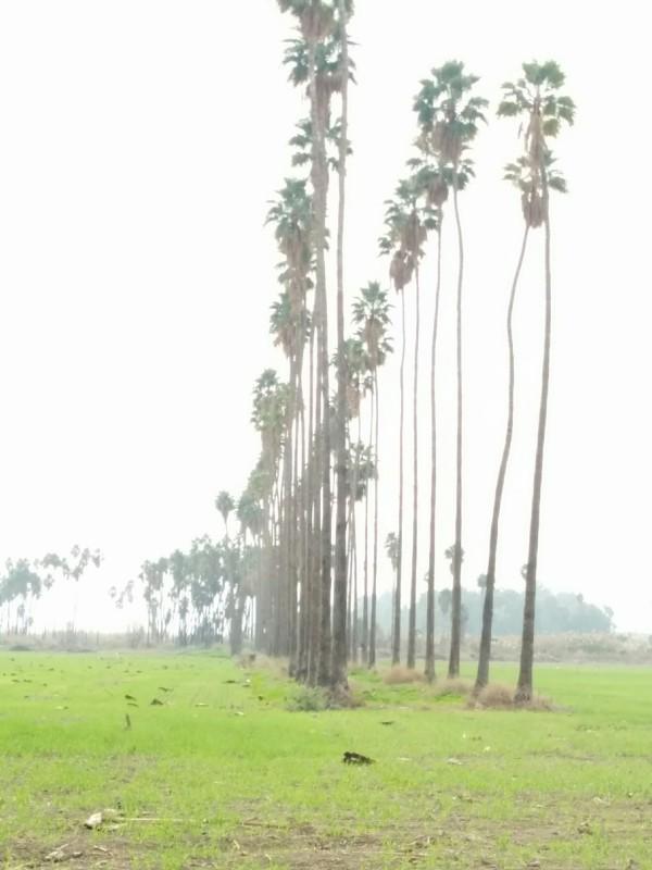 שרידי הטמפלרים בעמק בית שאן