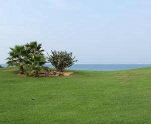 נוף שדות ים