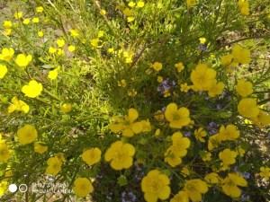 תל חנתון - צהוב