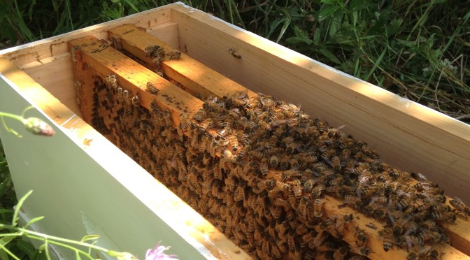 …Back to the Bees
